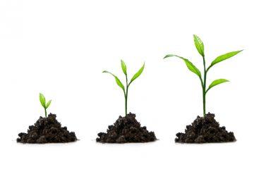 בניית אתרים בחשיבה עסקית